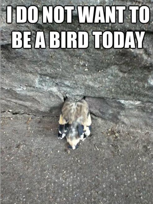birdy4